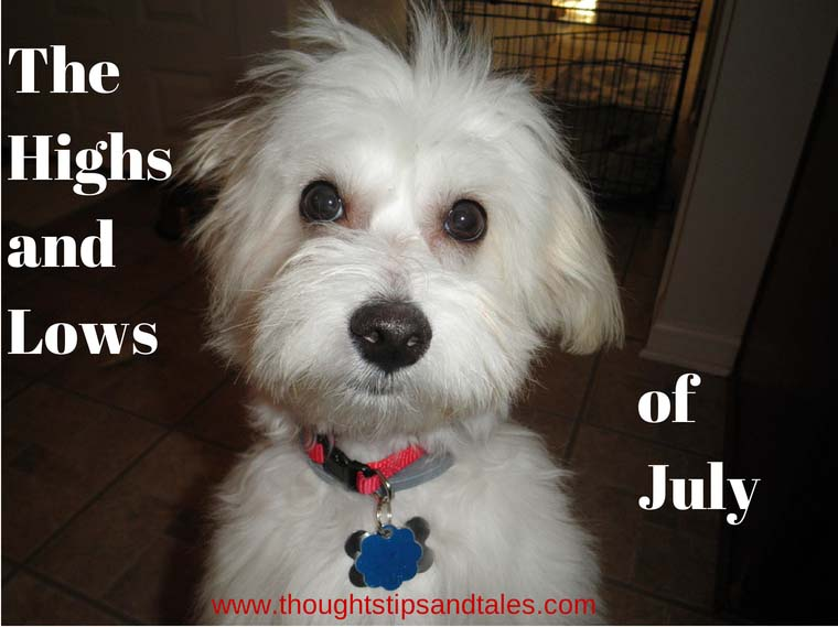 Cute little white dog for highs and lows of july 2014