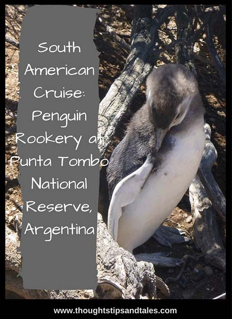 South American Cruise_ Penguin Rookery at Punta Tombo National Reserve Argentina