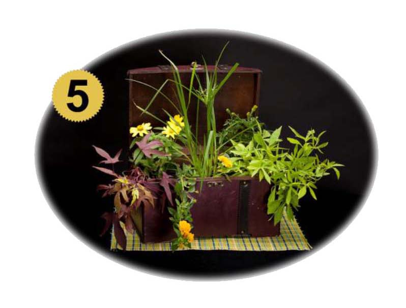 Fun Fundraiser: Container Garden Contest and Silent Auction