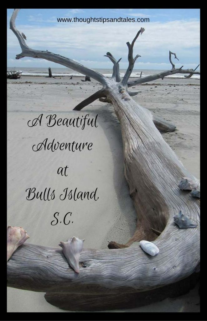 A Beautiful Adventure at Bulls Island SC
