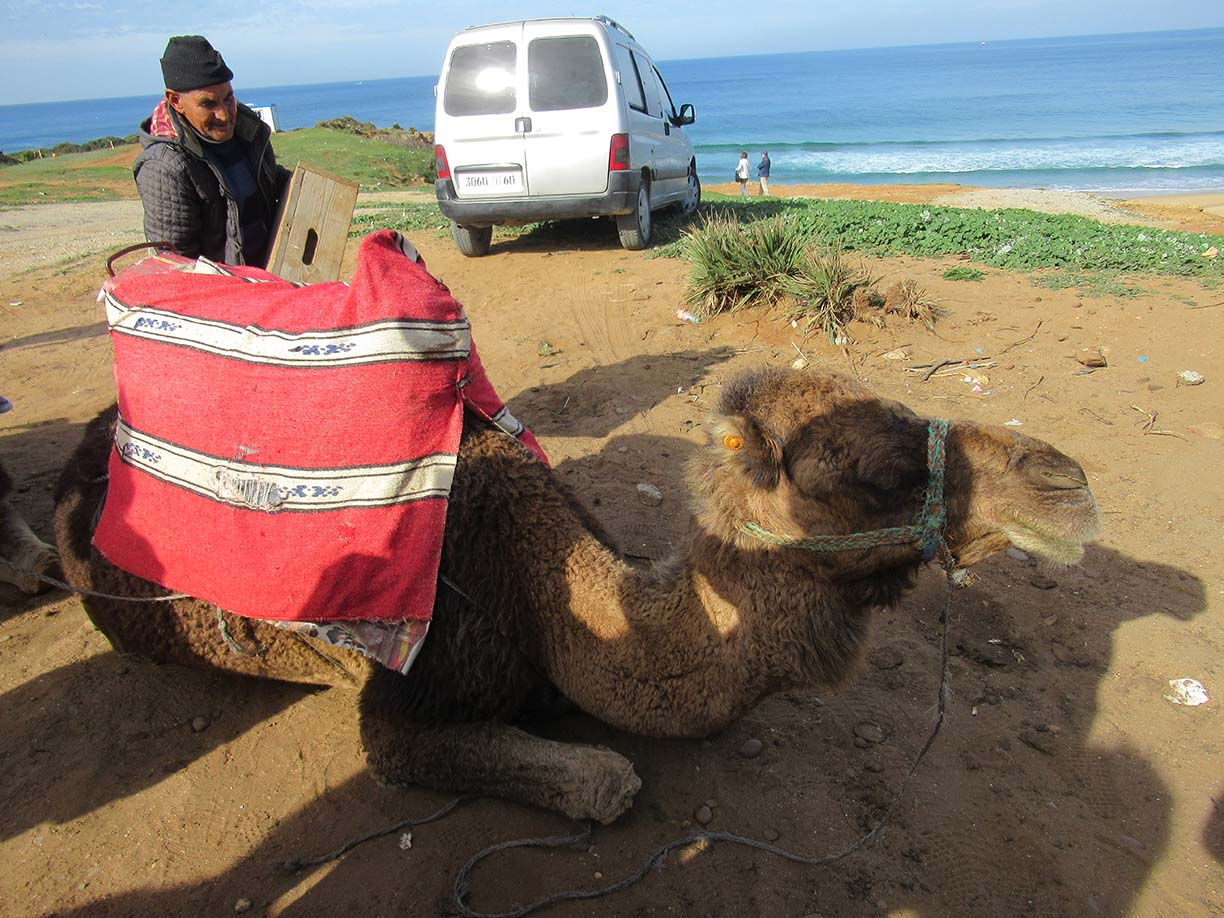 Riding Camels in Tangier, Africa, on a Norwegian Mediterranean Cruise